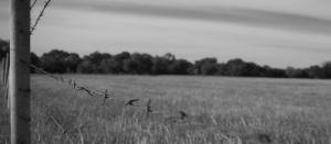 Pasture land, cattlewomen